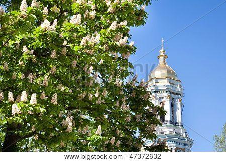 Kiev Pechersk Lavra Monastery And Chesnut Tree In Blossom