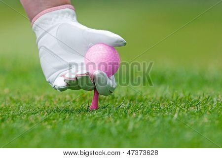 Uma mão de senhoras na luva de couro branco, segurando uma bola de golfe rosa colocando um tee no chão.