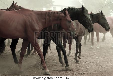 poster of Walking Horse Herd in the countryside of Ukraine
