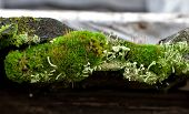 Old boards overgrown with green moss. See my other works in portfolio. poster