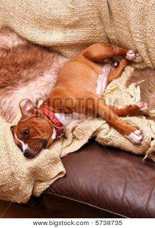 Dog Sofa Sleep