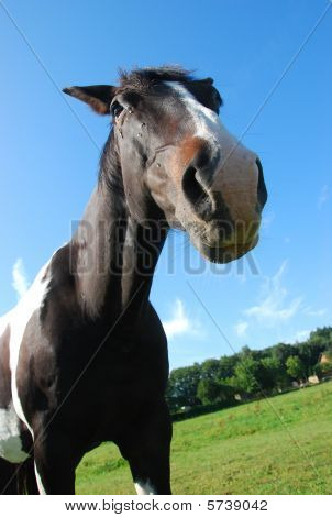 the image shows a beautiful nosy horse poster