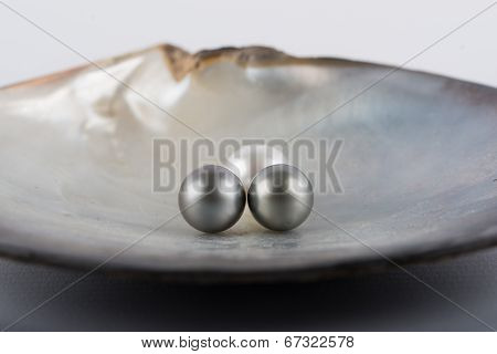Black and whire tahitian pearls in a oyster poster