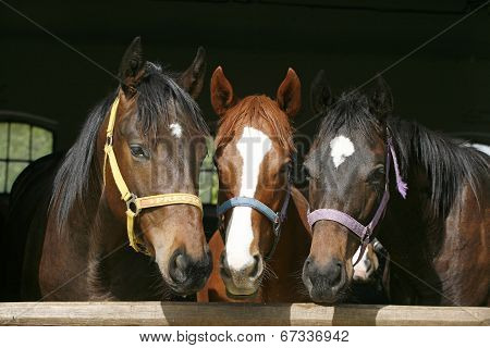 Horses in the barn door
