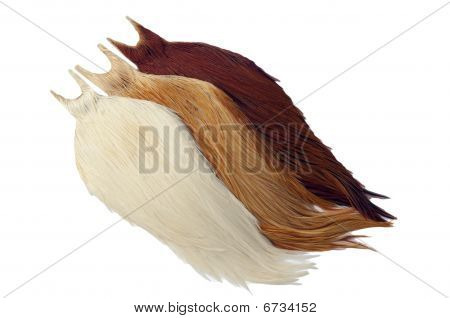 Rooster_Cape
