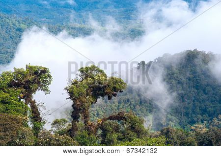 From Andes to Amazon View of the tropical rainforest Ecuador poster