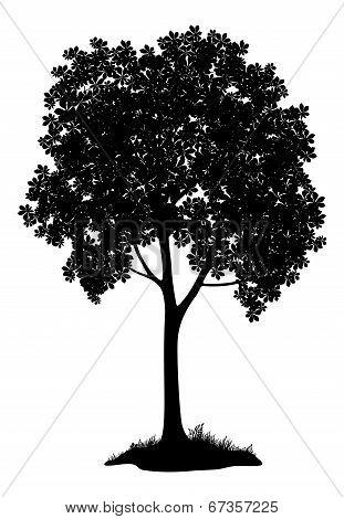 Chestnut tree, silhouette