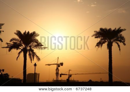 Evening Sun Over The Palms And Cranes