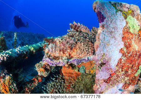 Scorpionfish on a coral reef
