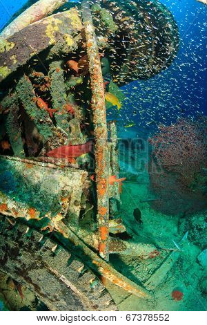 Colorful tropical fish and wreckage