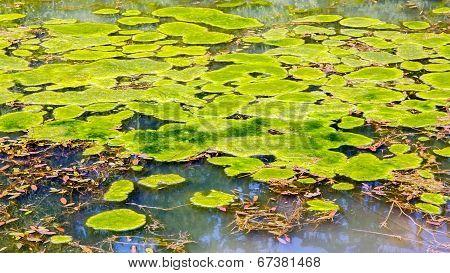 Floating Seaweed