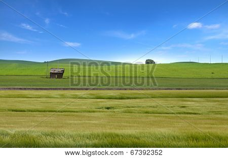 Beautiful wheat fields in Palouse, Washington