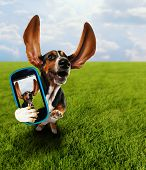a cute basset hound running in the grass taking a selfie on a cell phone poster