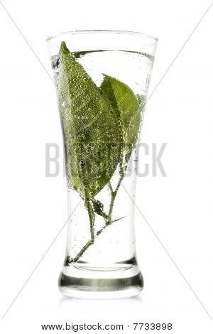 Fresh Beverage