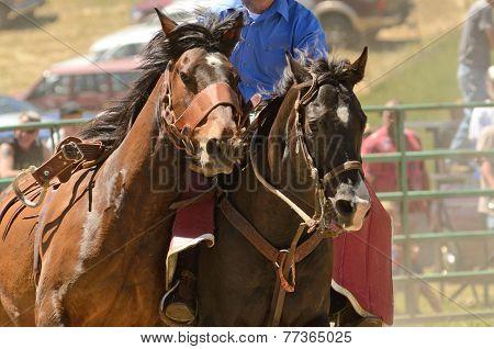Bronc Riding