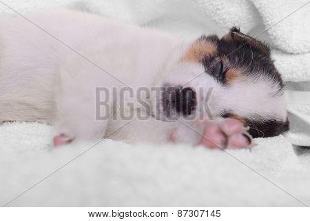 Puppy On A White Blanket