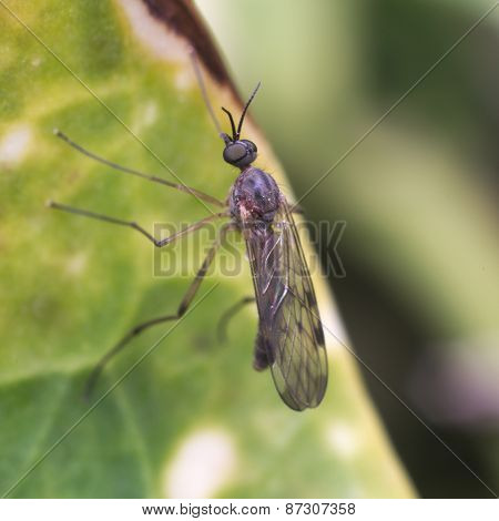 Fly resting on a leaf