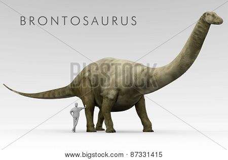 Dinosaur Brontosaurus And Human Size Comparison