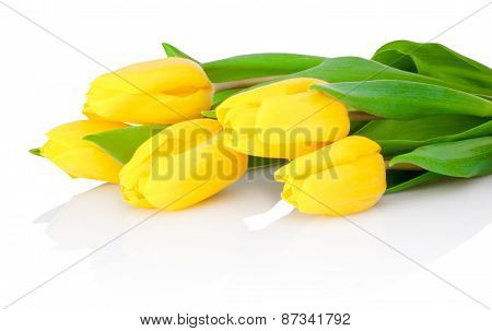 Yellow Tulip Flowers Are Isolated On A White Background