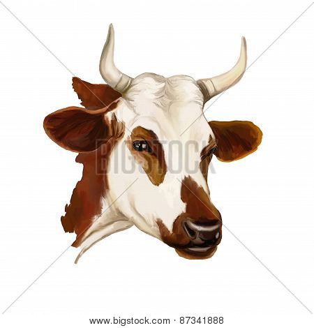 cow vector illustration  painted watercolor