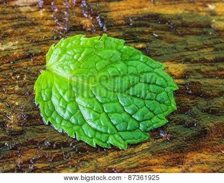 Mint Wet Leaves On The Wooden Floor.