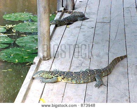 Mighty Big Lizards