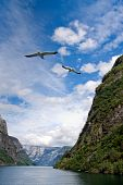 great view with mountains and ocean and flying gulls with motion blurr poster