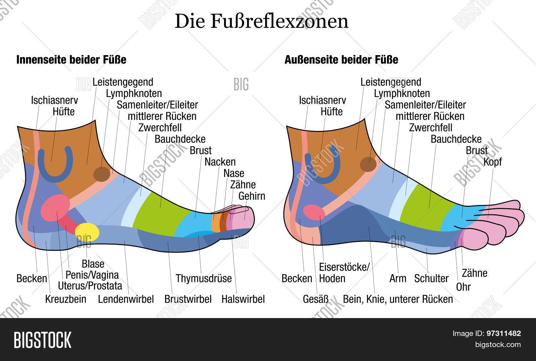 Nett Axillären Lymphknoten Anatomie Fotos - Anatomie Ideen - finotti ...