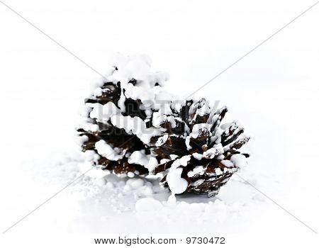 Brown Pine Cones.