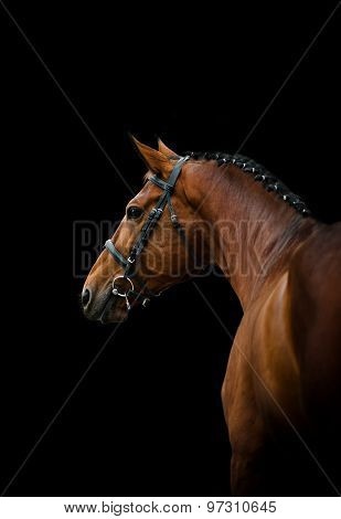 Dressage Horse Over A Black