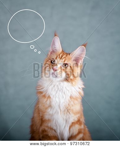 Maine Coon Cat Thinking