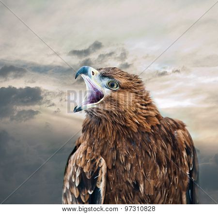 Eagle With Peak Open Against The Skies
