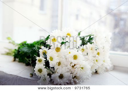 Bunch Of Camomile Flowers