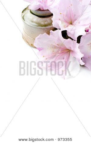 Fresh Flowers; Corner Clipped