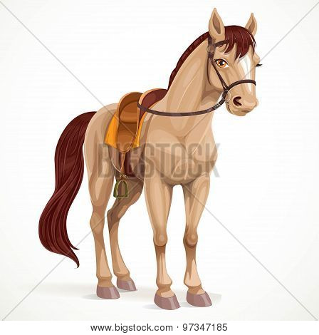 Beige Horse Saddled And In Harness