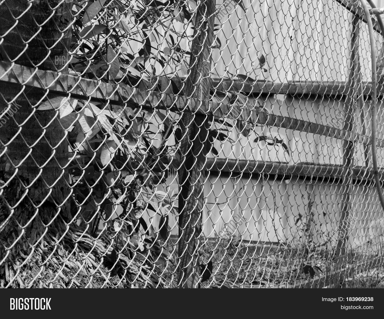 BLACK WHITE PHOTO Image & Photo (Free Trial)   Bigstock