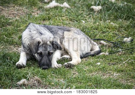 Cute and sweet sitting and sleeping dogs, dog pictures suitable for calendar leaves, dog pictures suitable for various projects,