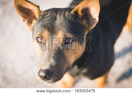 stray dog standing beside street in countryside