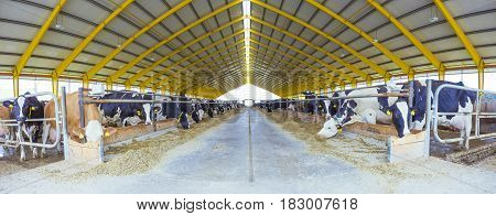 cowshed Livestock Farming Agriculture industry Panoramic View