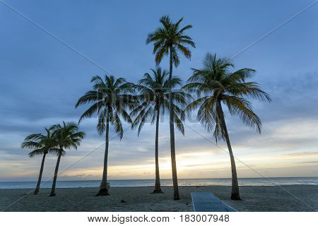 Palm trees at sunrise in Hollywood Beach. Florida United States