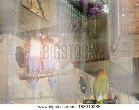 Freedom in the cage couple love bird love concept