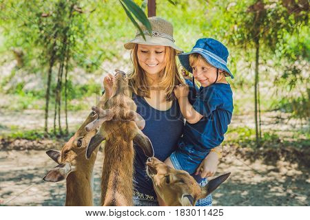Mother and son feeding beautiful deer from hands in a tropical Zoo.