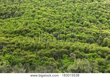 High resolution forest texture closeup photo as background