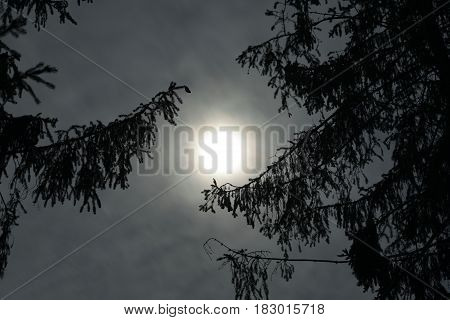 Night sky in the forest closeup footage
