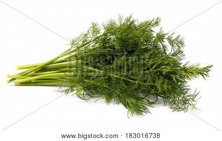 bunch fresh, green dill isolated on white background