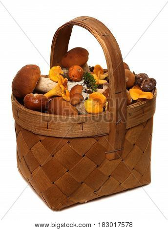 Basket of wild mushrooms isolated on white background. Wild Foraged Mushroom selection