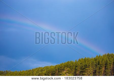 Blue Sky With Rainbow Over The Trees. Very Bright Rainbow With Flashy Colors And A Dark Blue Sky