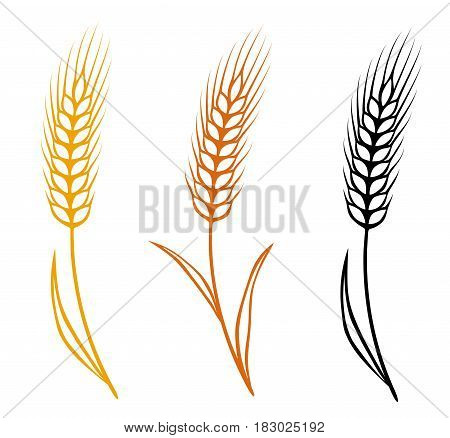 colorful isolated hand drawn wheat ears set
