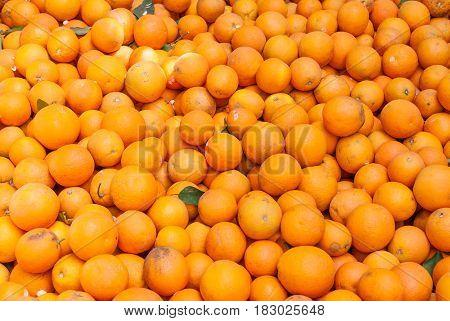 Many bright, fresh raw orange fruits, background