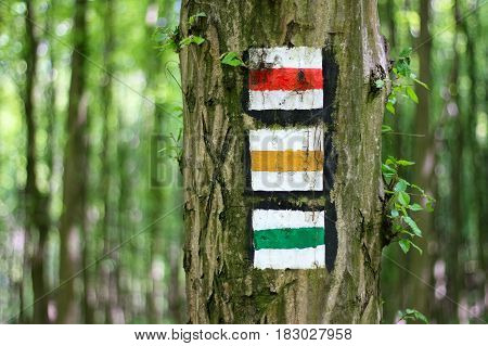 Red yellow and green tourist sign on tree in the forest